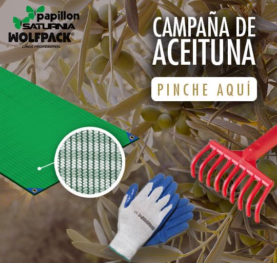 Camapaña Aceituna